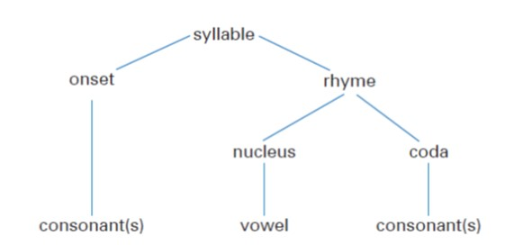 Parts of a syllable