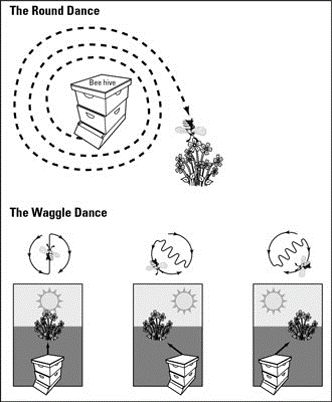 honey bee round dance and waggle dance